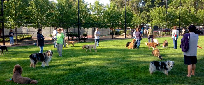 Considerations in Designing a Dog Park