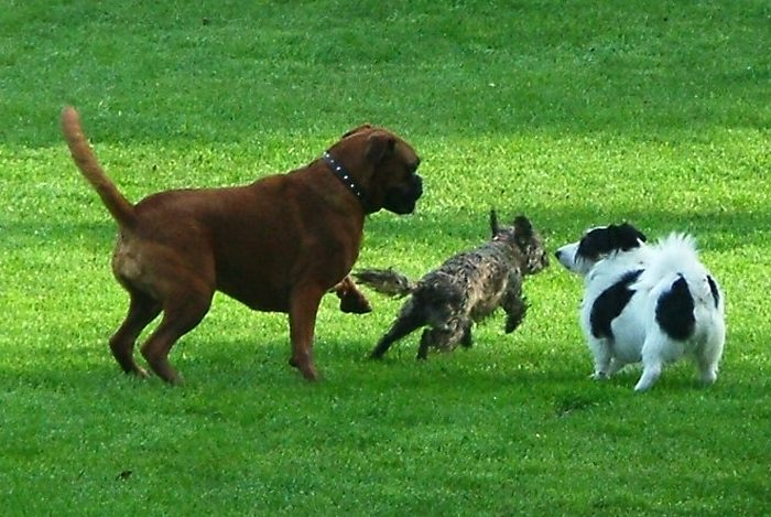 How to Handle Dog Aggression in the Dog Park