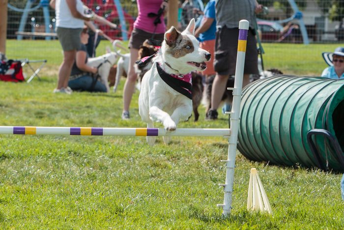 What Cities Benefit from Having Dog Parks